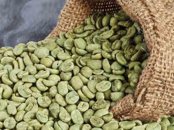 Зеленый кофе — вред или польза