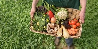 Органическое земледелие и продовольствие