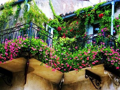 Какие растения лучше выращивать на балконе?